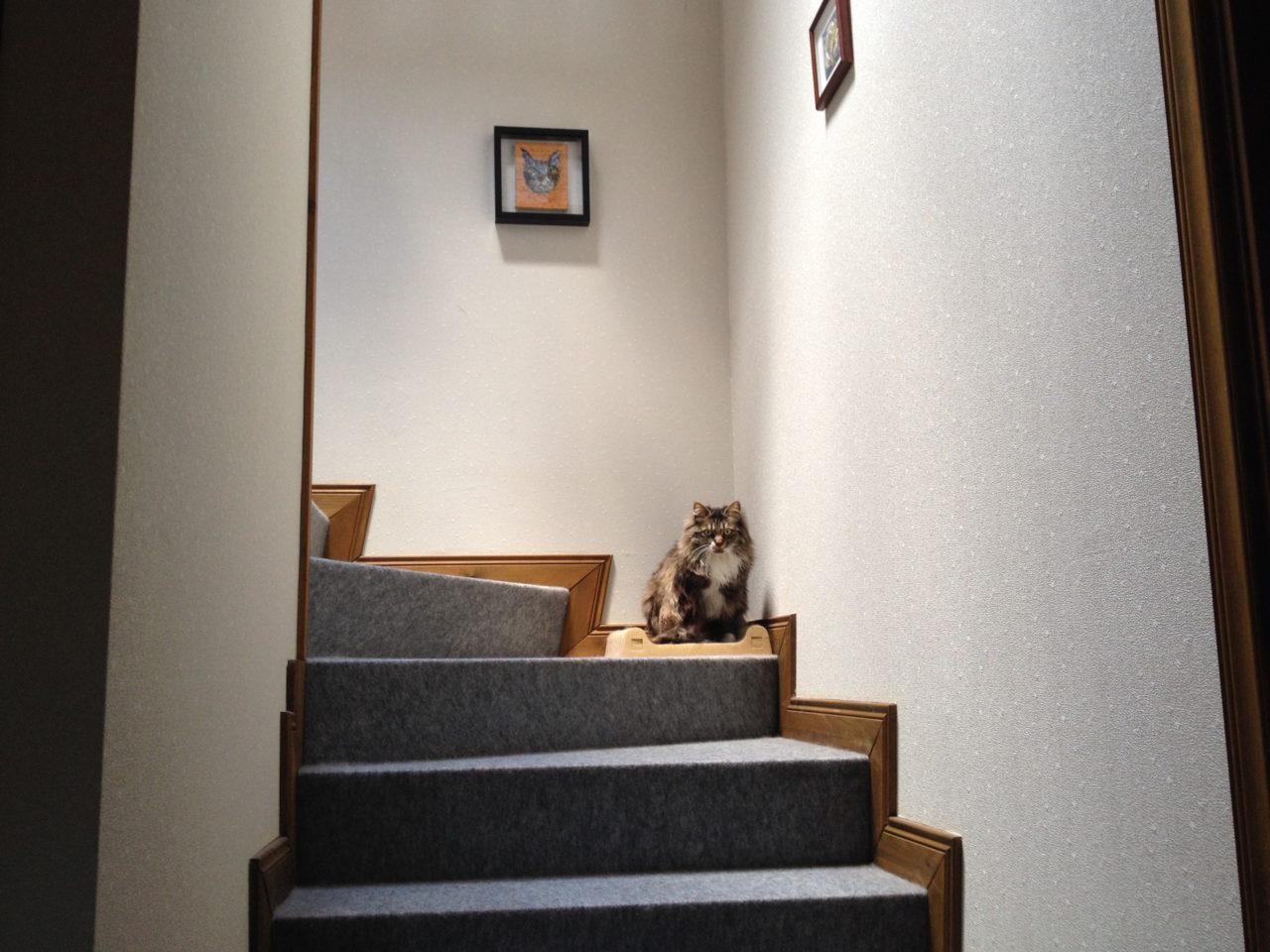 2階と3階を往復する猫