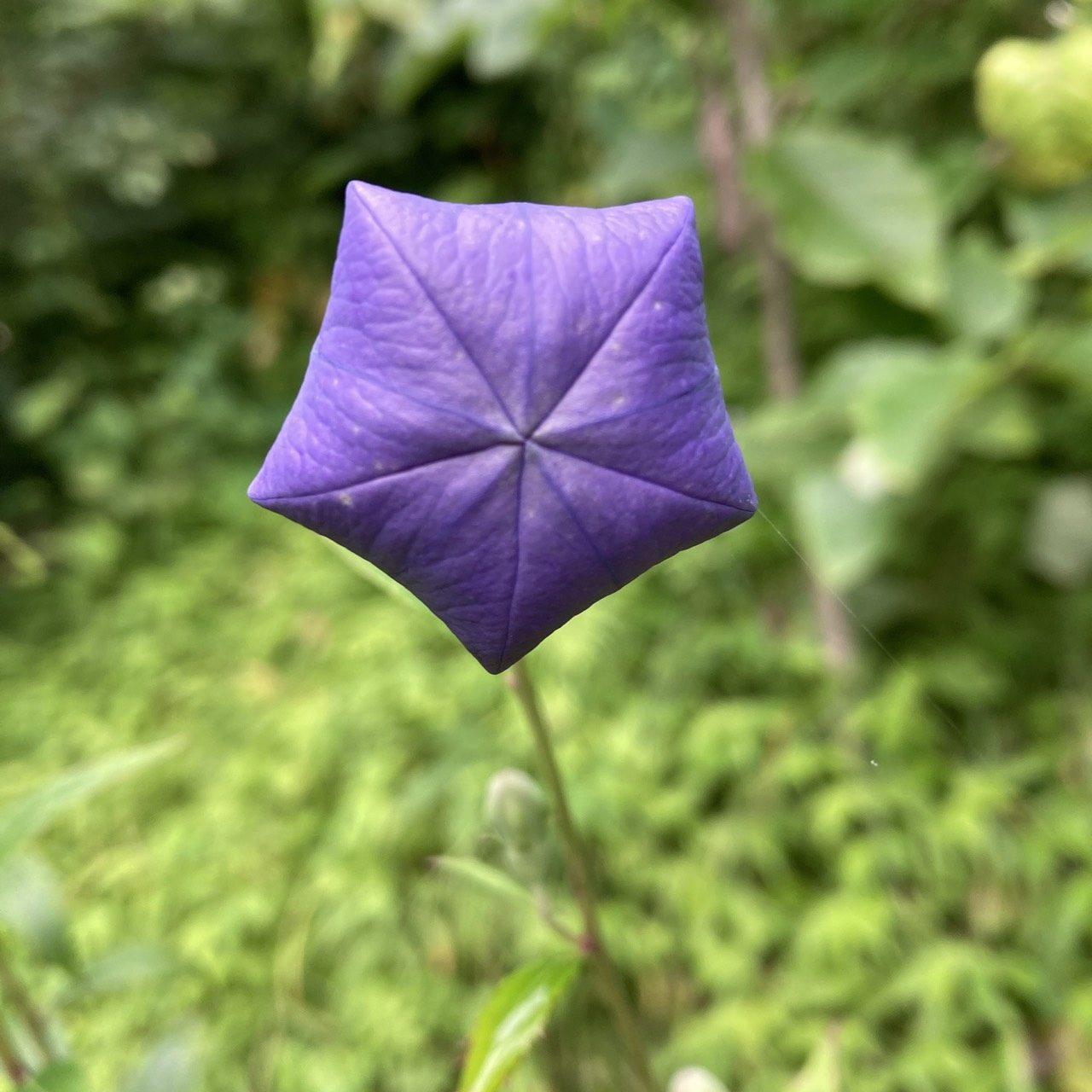 庭で見かける花たち