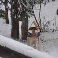 雪もがんばるシメ