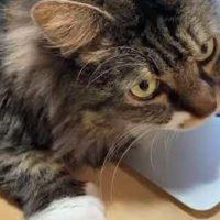 パソコンの熱で暖を取る猫