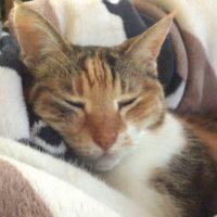 小さな猫が寝る瞬間