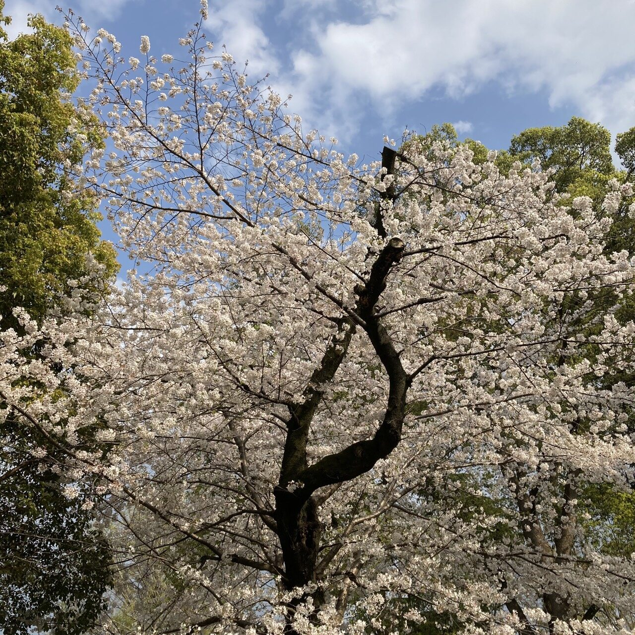 上野公園と東京都美術館