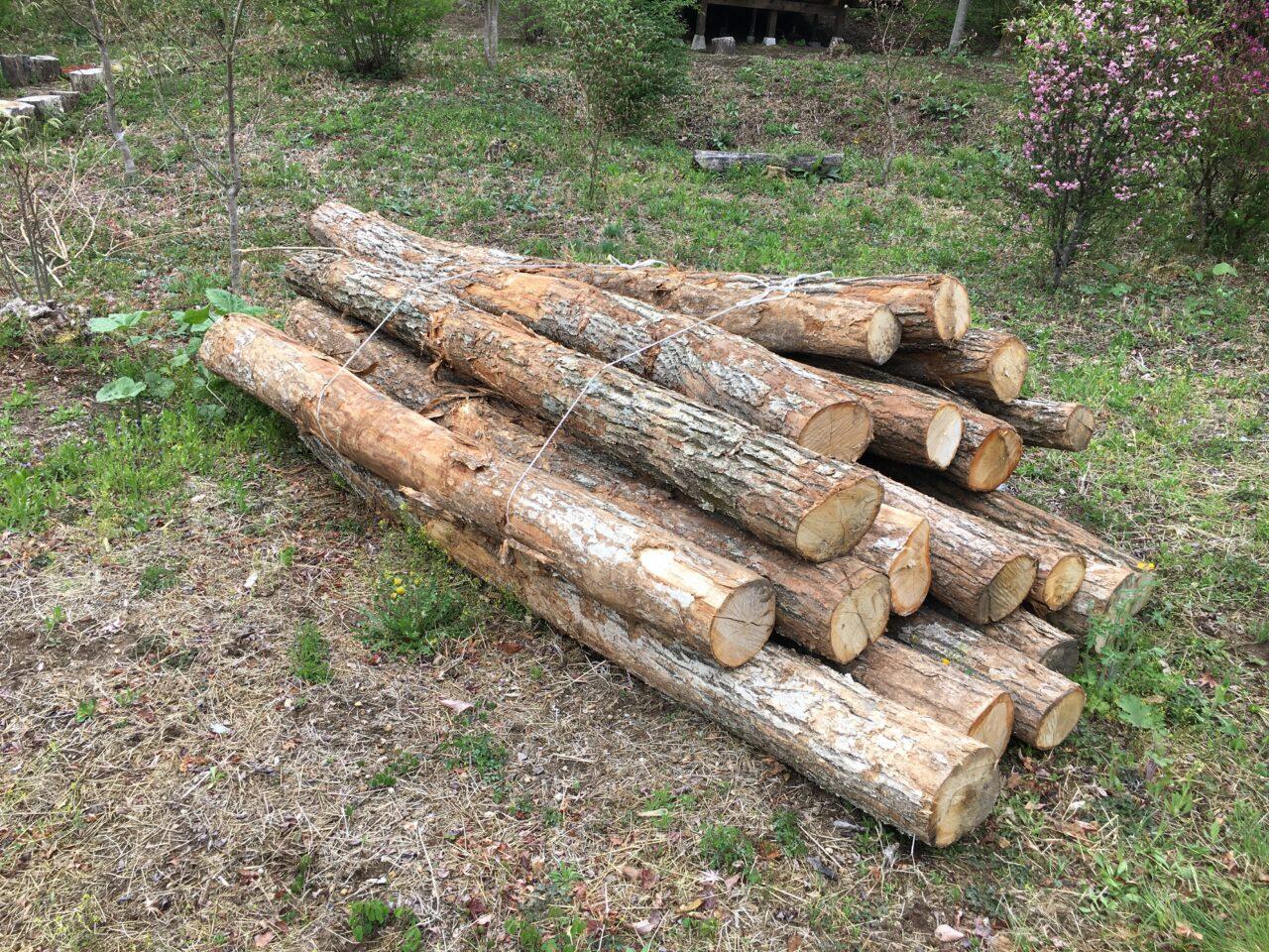ナラの原木を購入
