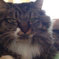 猫の額マッサージ