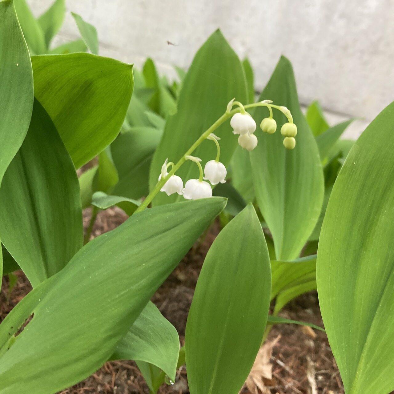 春に庭で咲いた花