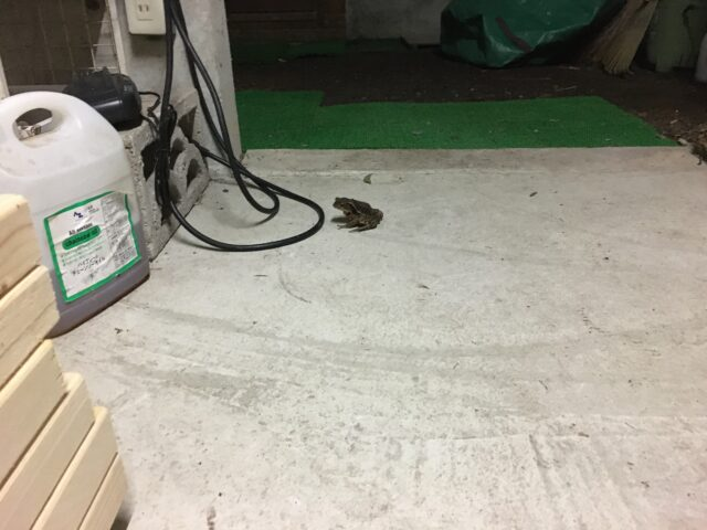 ガレージの蛙